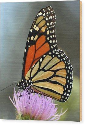 Beautiful Monarch Wood Print by Marty Koch