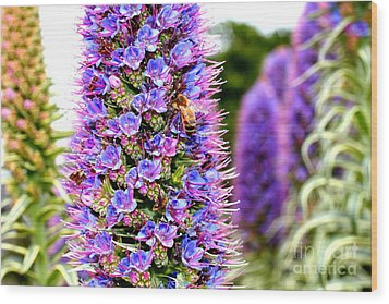 Bee On Purple Pride Of Madeira Flowers . 7d14835 Wood Print by Wingsdomain Art and Photography