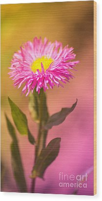 Little Flower Wood Print by Angela Doelling AD DESIGN Photo and PhotoArt