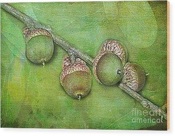 Big Oaks From Little Acorns Grow Wood Print by Judi Bagwell