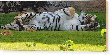 Big Pussycat Wood Print by Barbara Walsh