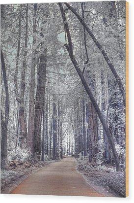 Big Sur State Park Wood Print by Jane Linders