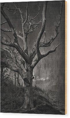 Big Talbot Island Wood Print by Mario Celzner