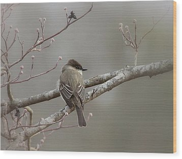 Bird - Eastern Phoebe - Very Contented Wood Print by Travis Truelove