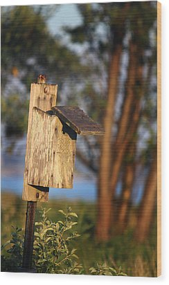 Birdhouse 23 Wood Print by Andrew Pacheco