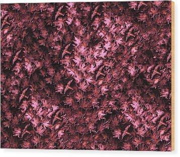 Birds In Redviolet Wood Print by David Dehner