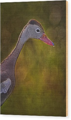 Black Bellied Whistling-duck Wood Print by Anne Rodkin