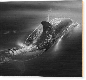Black Dolphin Wood Print by Steve Munch