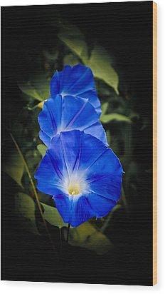 Blue Beauty Wood Print by Swift Family