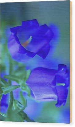 Blue Bell Flowers Wood Print by Kathy Yates