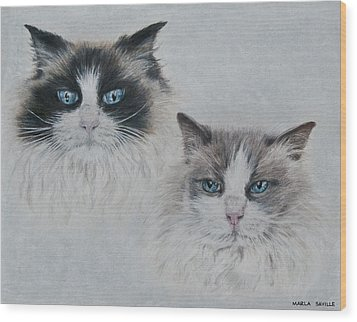 Blue Eyed Cats Wood Print by Marla Saville