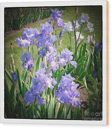 Blue Ruffles 2 Wood Print by Susan  Lipschutz