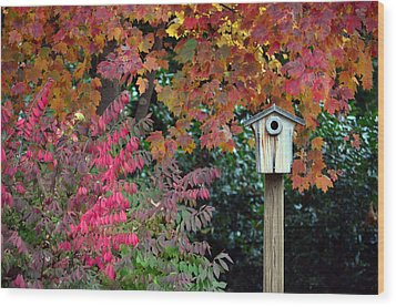 Bluebird House Color Surround Wood Print by Sandi OReilly