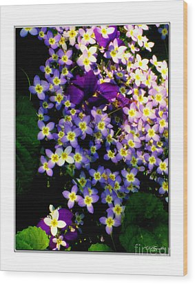 Bluets And Violets Wood Print by Diana  Tyson