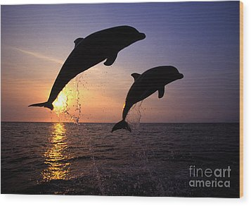 Bottlenose Dolphins Wood Print by Francois Gohier and Photo Researchers