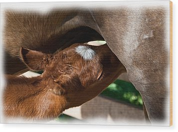 Brand New Colt..day Two Wood Print by Lisa Moore