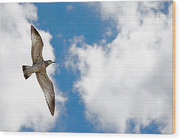 Bright Gull Wood Print by Kelly Anderson