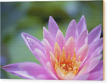 Bright Pink Water Lily II Wood Print by Kicka Witte