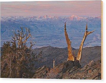 Bristlecone Bishop Sunrise Wood Print by Nolan Nitschke