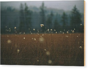 Browned Autumn Field Of Cotton Grass Wood Print by Raymond Gehman