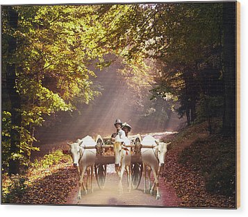 Bulls Ride Wood Print by E  Kraizberg
