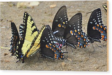 Butterflies By The Buches Wood Print by Marty Koch