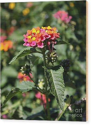 Butterfly Bush Wood Print by Elizabeth Coats