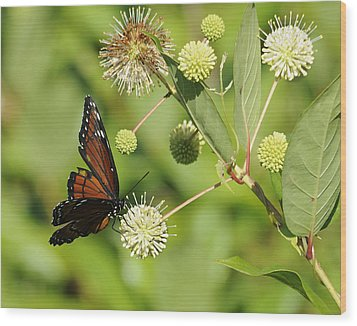 Butterfly Wood Print by Keith Lovejoy