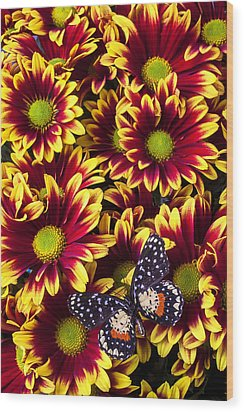 Butterfly On Yellow Red Daises  Wood Print by Garry Gay