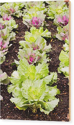 Cabbages Wood Print by Tom Gowanlock