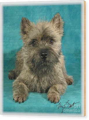 Cairn Terrier Pup Wood Print by Maxine Bochnia