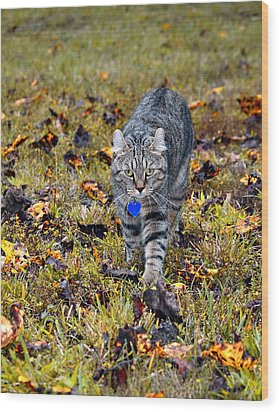 Cat In Autumn Wood Print by Susan Leggett
