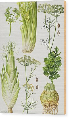 Celery - Fennel - Dill And Celeriac  Wood Print by Elizabeth Rice