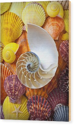 Chambered Nautilus  Wood Print by Garry Gay
