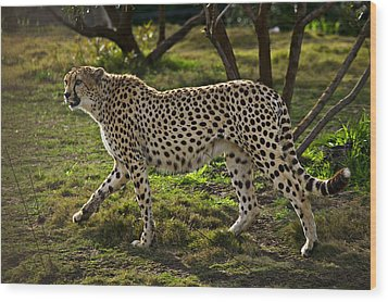 Cheetah  Wood Print by Garry Gay