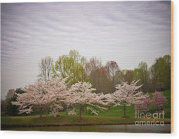 Cherry Blossoms At Meadowlark Wood Print by Susan Isakson