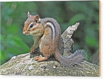 Wood Print featuring the photograph Chipmunk by Rodney Campbell