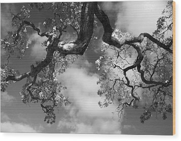 Cloudy Oak Wood Print by Laurie Search