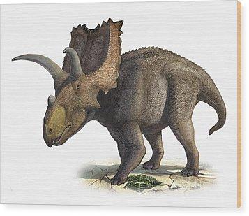 Coahuilaceratops Magnacuerna Wood Print by Sergey Krasovskiy