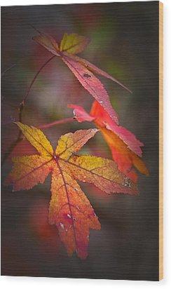Colors Wood Print by Karol Livote