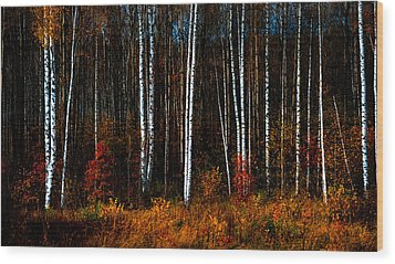 Colors Of Fall Wood Print by Jenny Rainbow