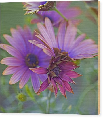 Copper Daisies 1 Wood Print by Bonnie Bruno