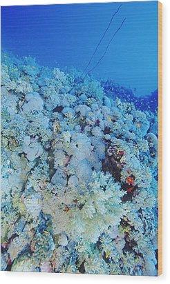 Coral Reef Wood Print by Alexis Rosenfeld