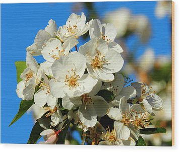 Crab Apple Blossom Macro 001 Wood Print by Lance Vaughn