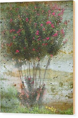 Crape Myrtle Wood Print by Debbie Portwood