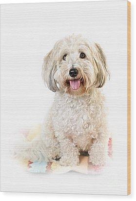 Cute Dog Portrait Wood Print by Elena Elisseeva