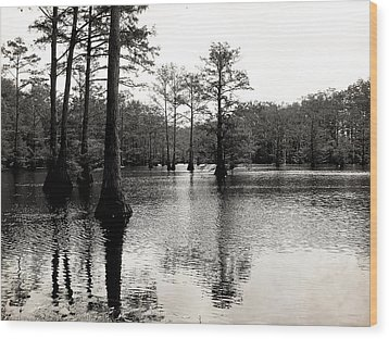 Cypress Trees In Louisiana Wood Print by Ester  Rogers