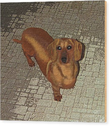 Dachshund - Cinnamon Wood Print by L J Oakes