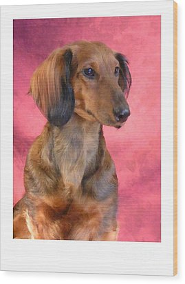 Dachshund 472 Wood Print by Larry Matthews