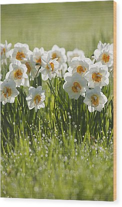 Daffodils In The Dew Covered Grass Wood Print by Susan Dykstra